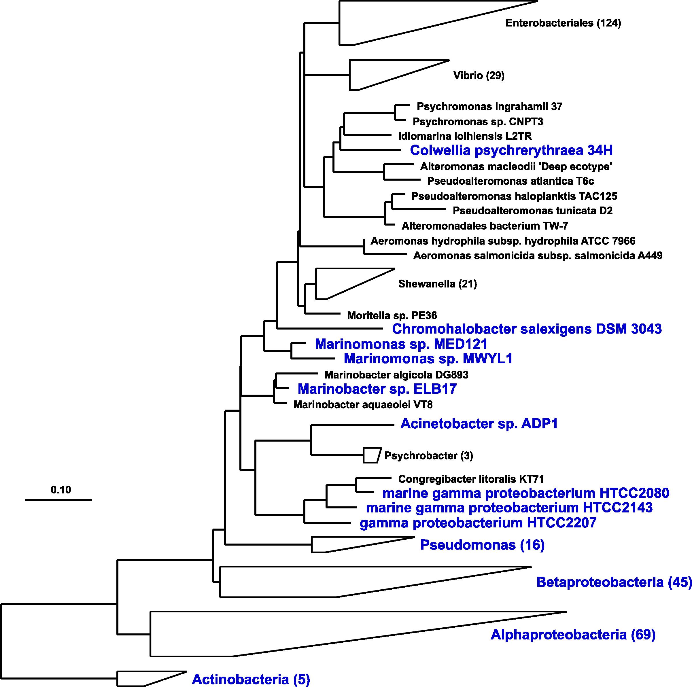 img-16S-phylogeny